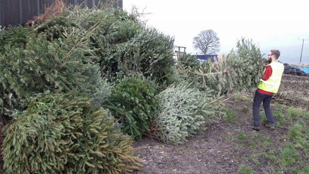 Het verzamelen van kerstbomen voor recycling